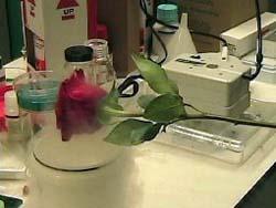 how to make solid nitrogen